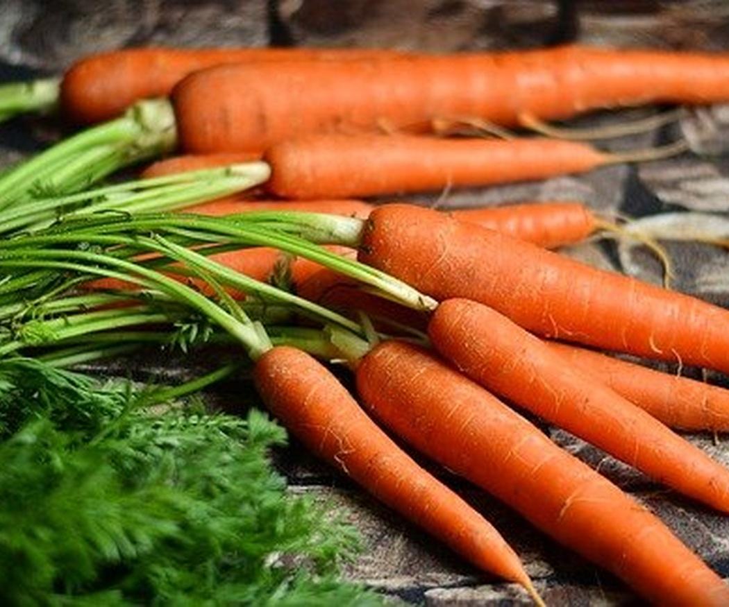 Zanahorias, un cultivo social