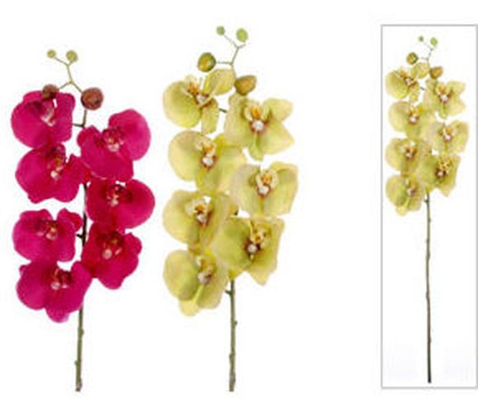 Orquídea Phalenopsis Látex