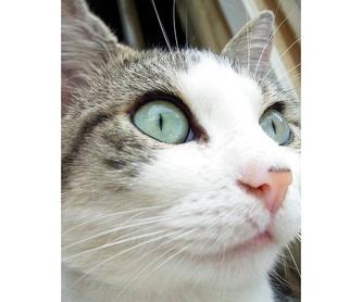 Especialistas: Servicios veterinarios de Centro Veterinario Ciudad de los Ángeles