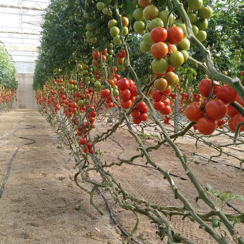 Suministro de todo tipo de semillas en El Ejido