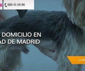 Peluquería canina en Fuenlabrada | Ángel Dog