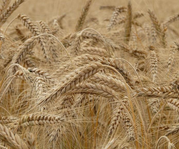 Comercialización de cereales y oleaginosas: Servicios de Isaticar