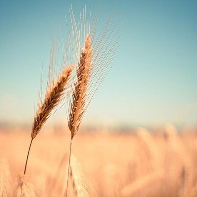 Alternativas a la harina de trigo
