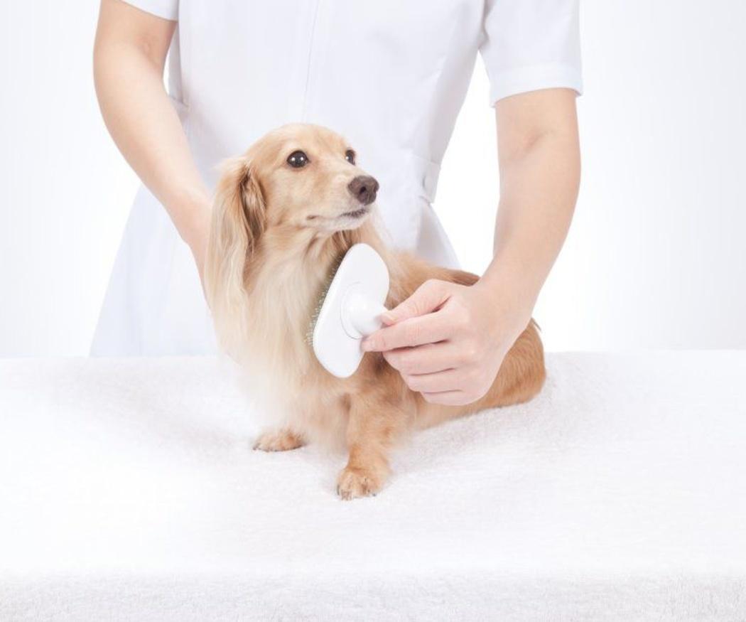 Cómo cepillar el pelo a un perro
