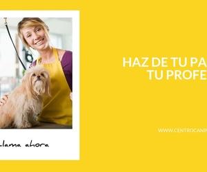 Residencias caninas en Alzira - Centro Canino Unidos