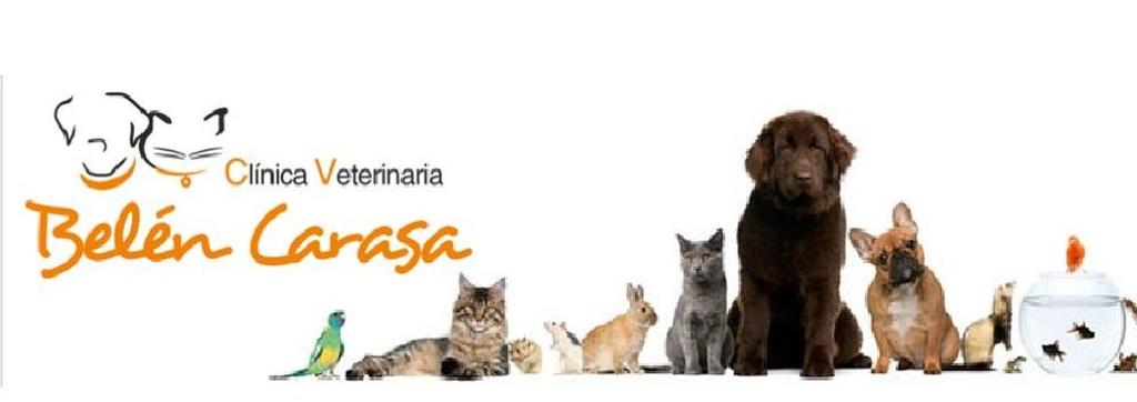 Veterinarios en Tudela | Clínica Veterinaria Belén Carasa
