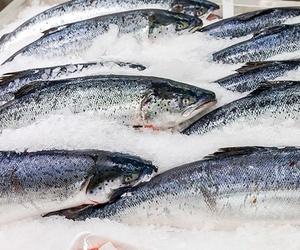 Importación de pescado en Pontevedra