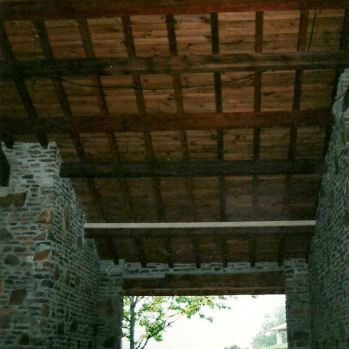 Carcoma de la madera Donostia