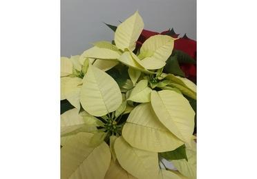 Arreglo de Navidad con orquídea