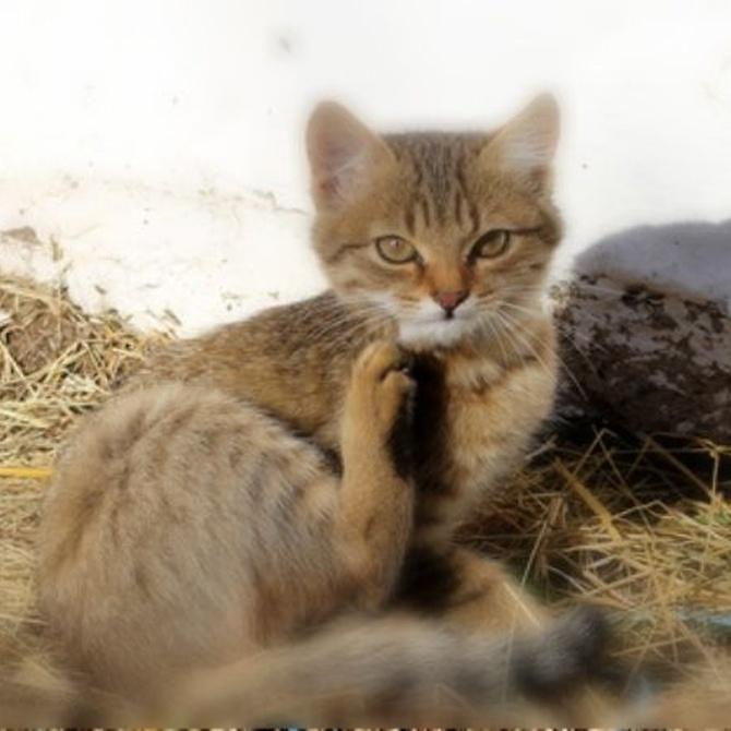 ¿Tu gato tiene pulgas?