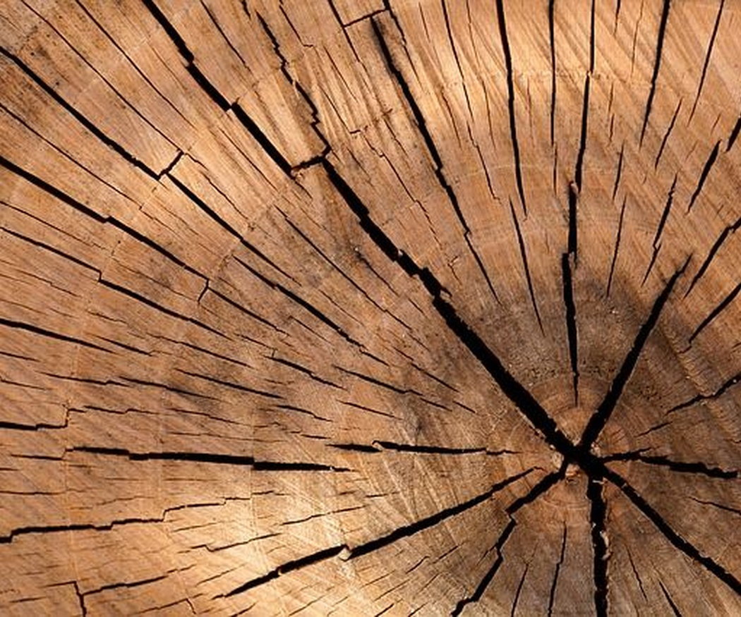 Las mejores maderas para puertas exteriores