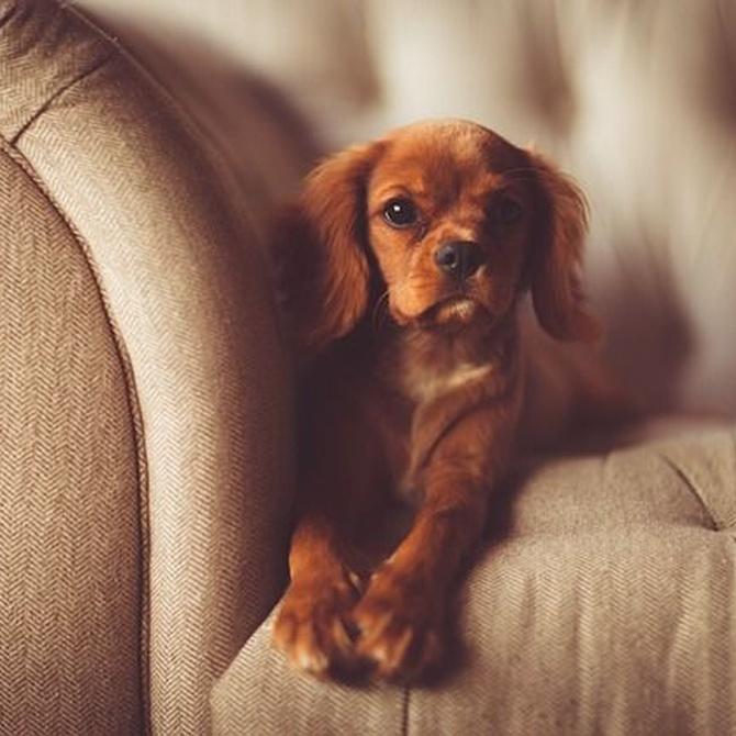La necesidad de limpiar la tapicería de tu sofá