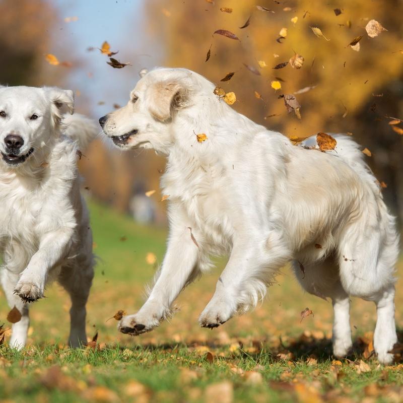 Perros: Servicios de Animal Home 2014