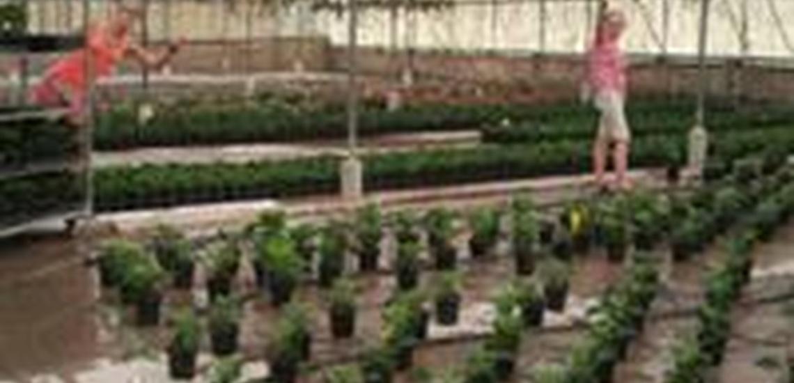 Viveros de plantas ornamentales en Castellón al mejor precio