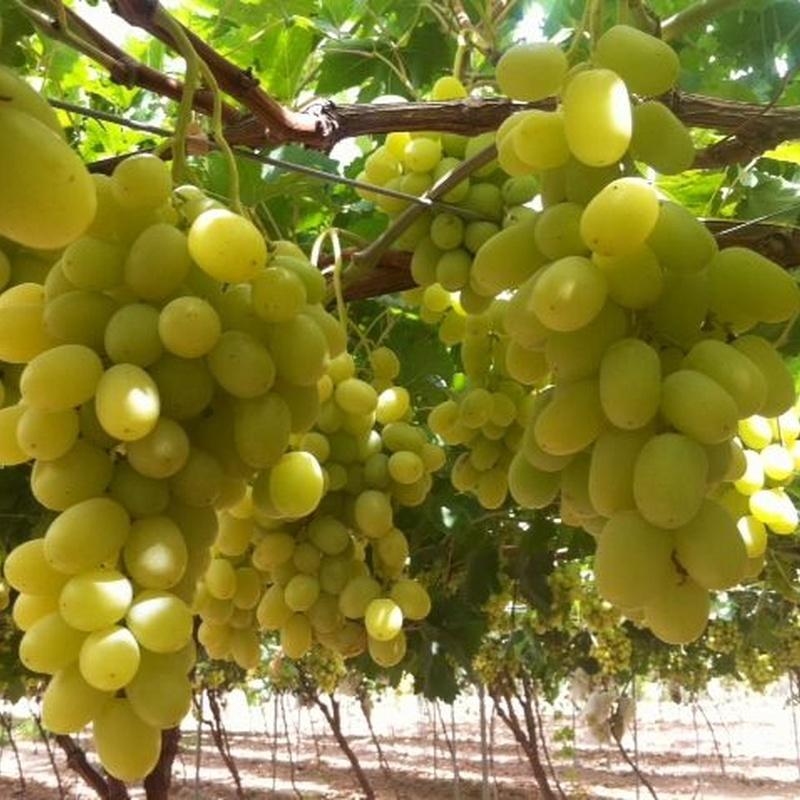 Uvas: Productos de Uniland