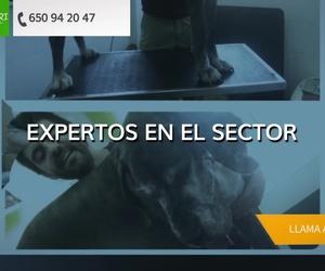 Peluquería canina y felina en Castellón - Zoofari Estilisme Caní