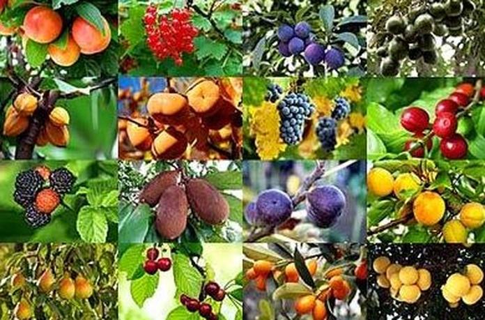 Arboles frutales y semillas en Aguilar de Campoo