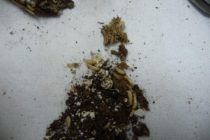 Termitas en asturias