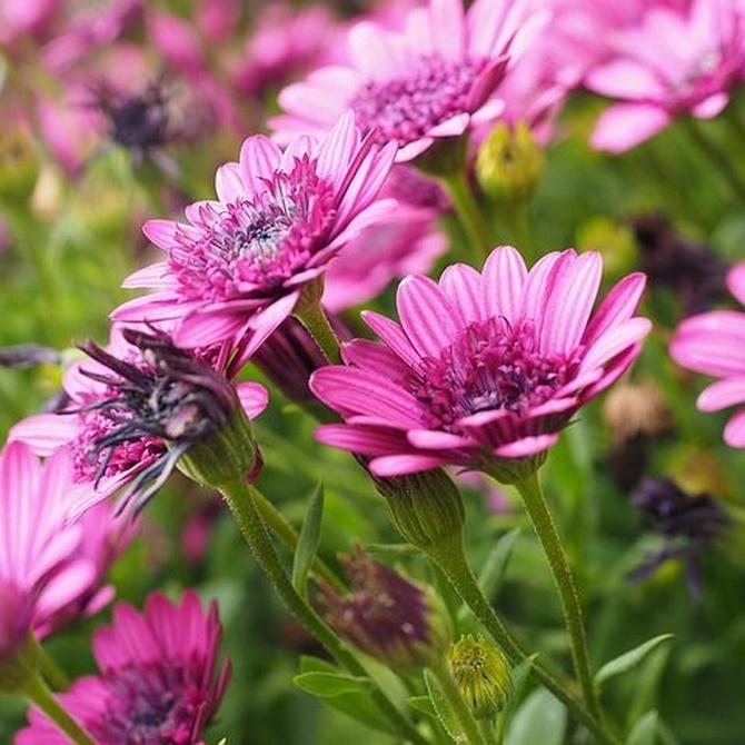 Las mejores flores de verano