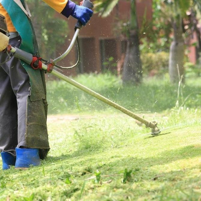 El mejor mantenimiento de tus jardines