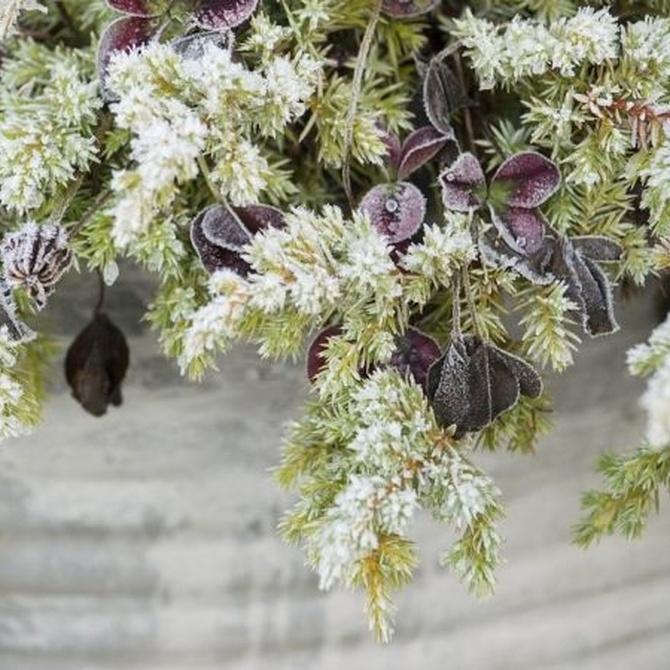 Consejos para tu jardín en invierno