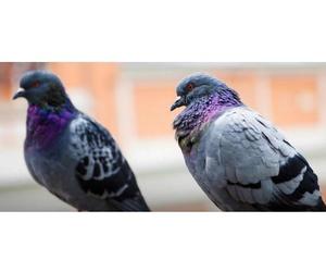 Control de aves: Aplicaciones FumiServ
