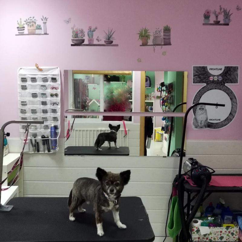 Peluquería Canina: Servicios de Orejotas