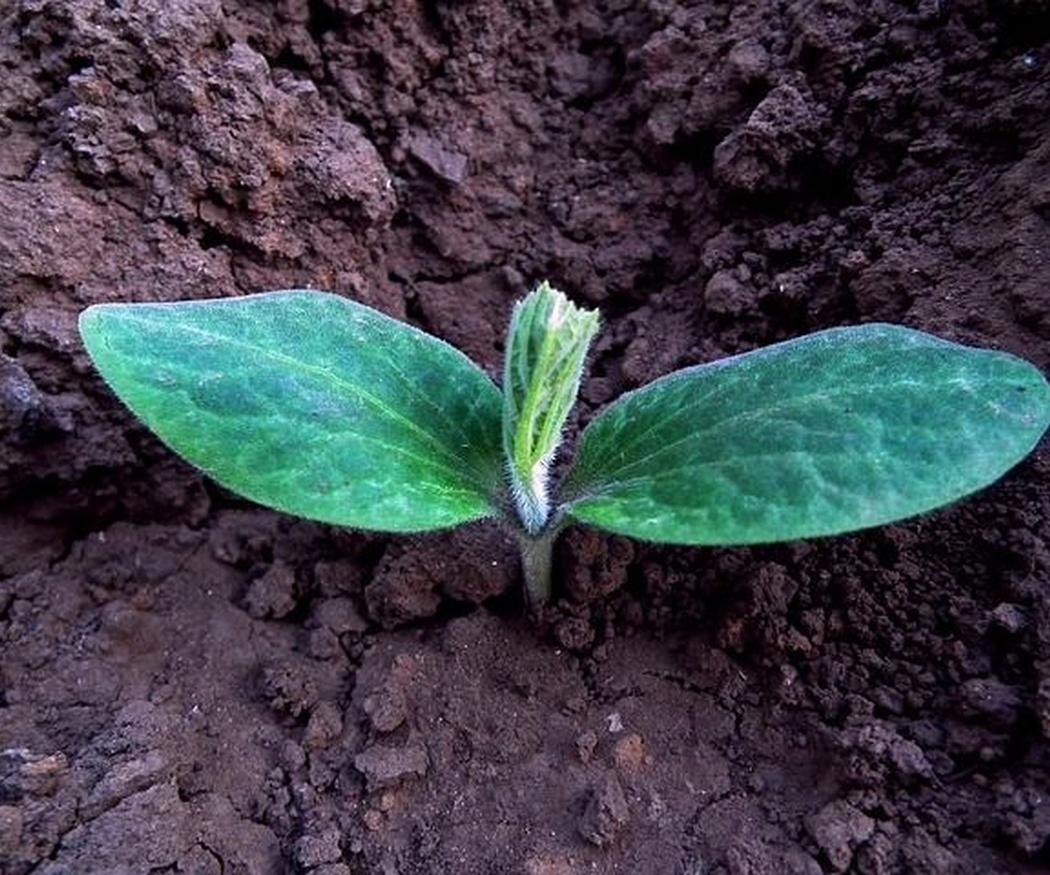 Factores principales para plantar un huerto en tu jardín