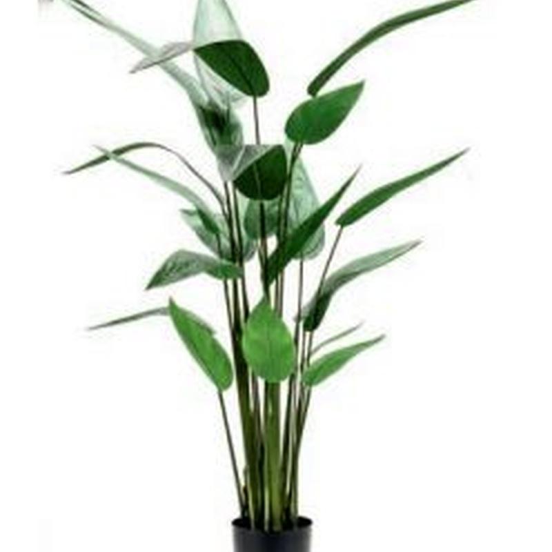 Árbol Heliconia: ¿Qué hacemos? de Ches Pa, S.L.
