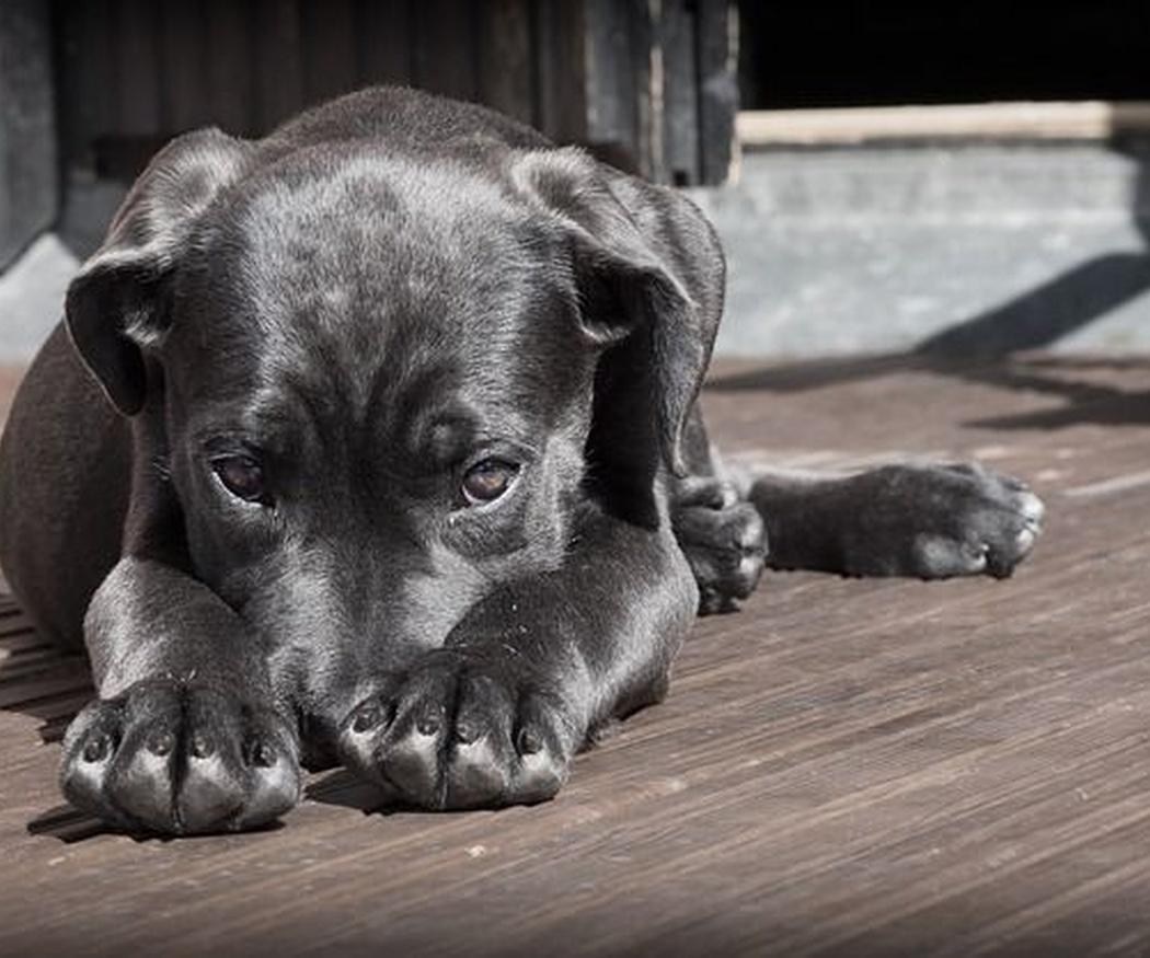 Empatiza con tu mascota con los movimientos de su cola