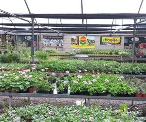 Venta de plantas y flores en Monforte de Lemos