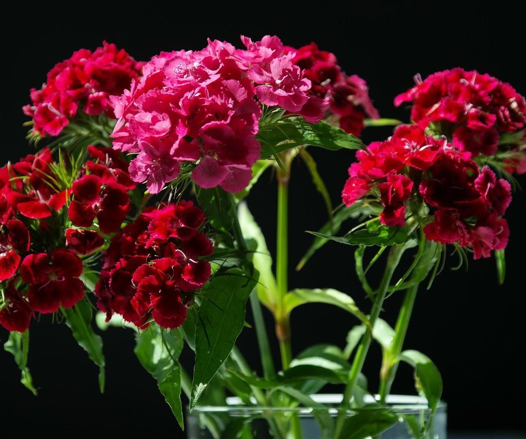 Los alérgicos al polen también pueden disfrutar de un ramo de flores