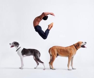 Campaña Esterilización de Perros y Gatos 2019