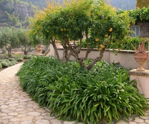 Jardín - Huerto