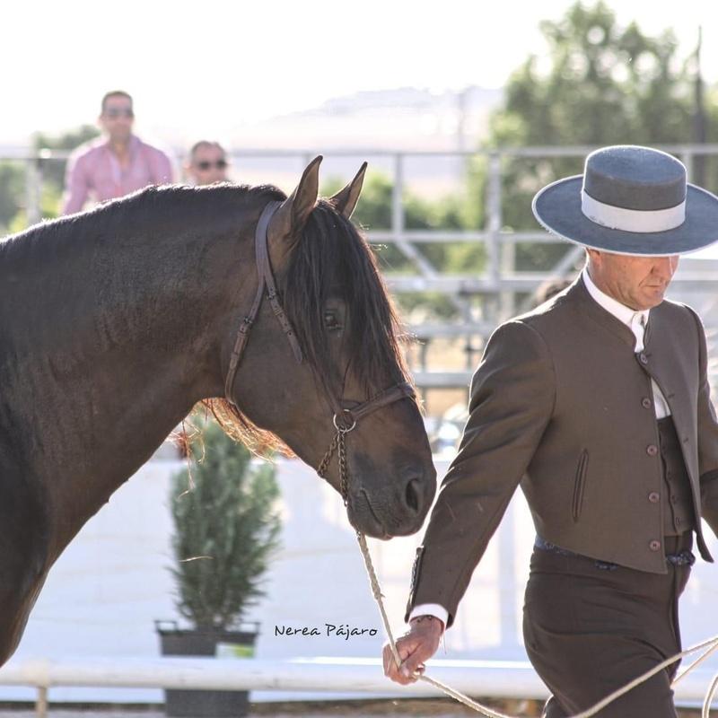 Compra y venta de caballos: Servicios de Hípica Sol y Luna