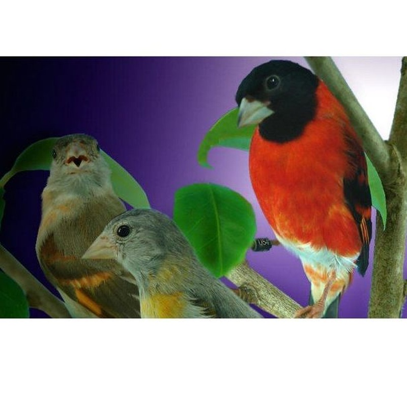 Alimentación  para pájaros: Productos de Casa Clemente
