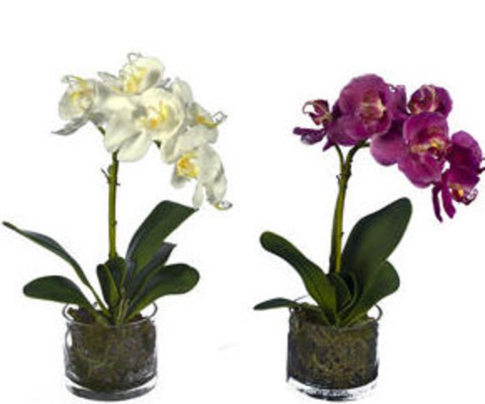 Maceta Orquídea Phalenopsis Látex x41cm