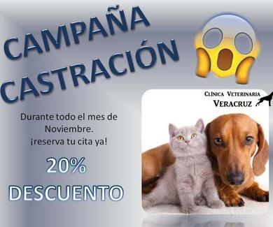 Campaña de esterilización canina y felina en Mostoles