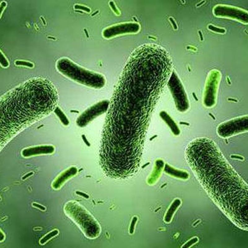 Empresas de desinfección en Bizkaia