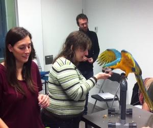 Vídeo del curso Práctico de comportamiento de Loros del mes de noviembre de 2014