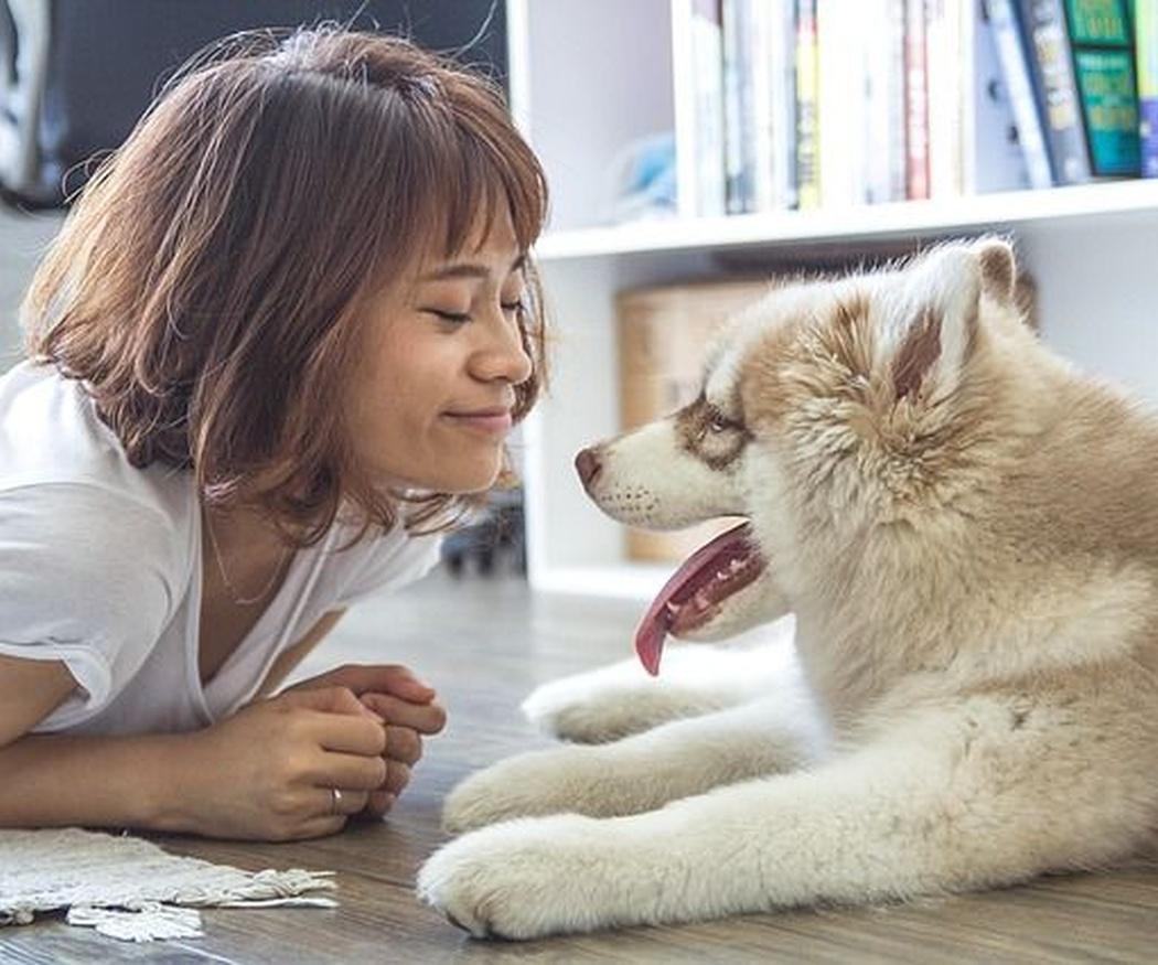 La importancia del cuidado estético de los perros