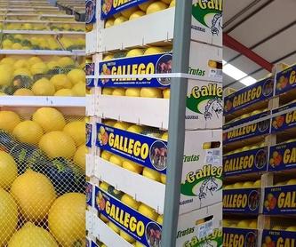 Recolección: Productos y servicios de Agriocítricos Hermanos Gallego