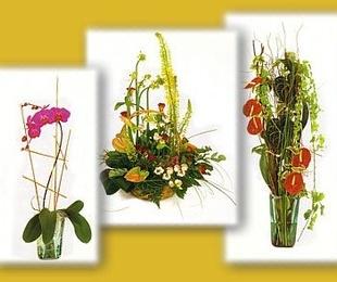 Flor y planta natural