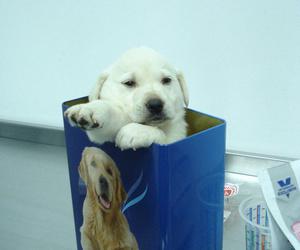 Control sanitario a cachorros