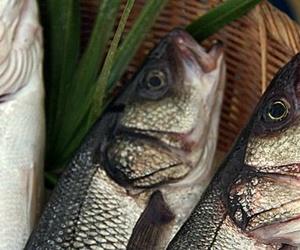 Supermercado con pescadería en Baleares