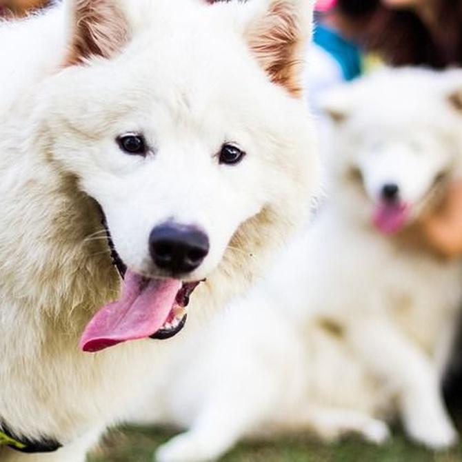 Consejos para el cuidado de la boca de tu perro