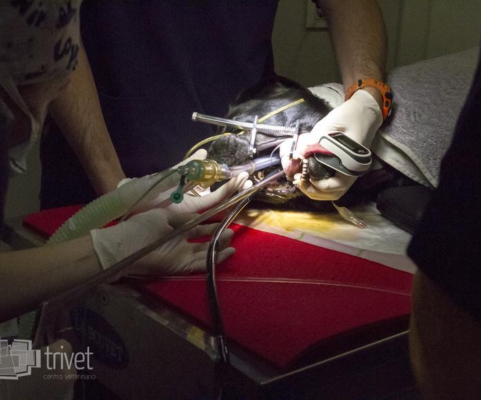 Urgencias 24h: Servicios de Centro Veterinario Trivet