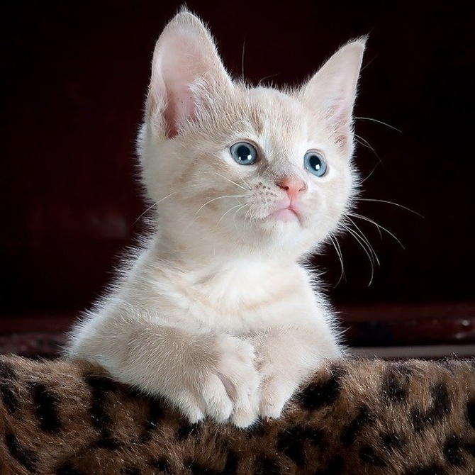 ¿Los gatos nos quieren o nos odian?