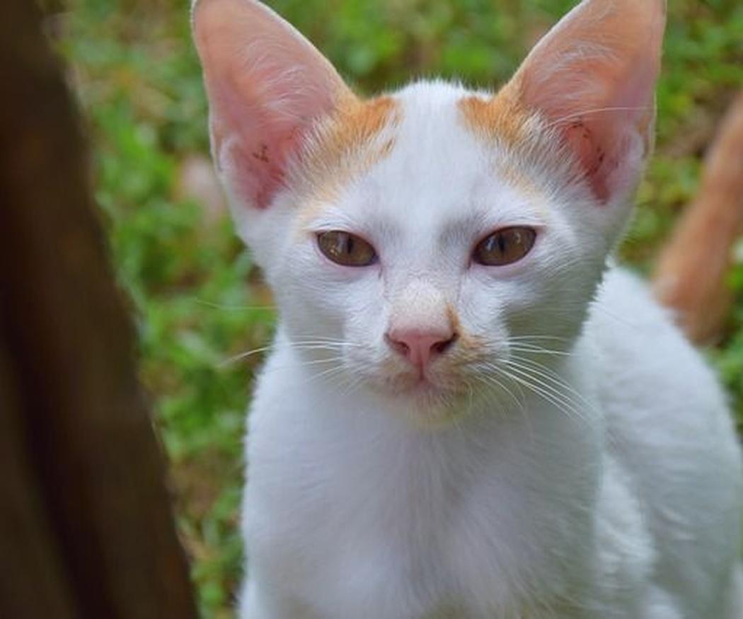 Síntomas y tipos de parásitos internos en gatos