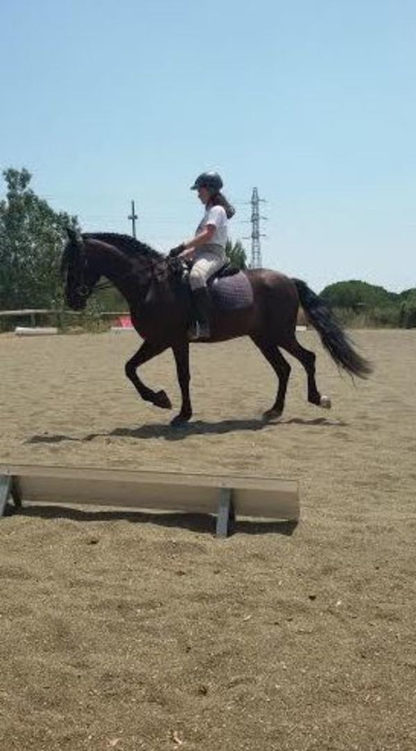 Clases de perfeccionamiento con caballos de escuela. Preparando para competir.